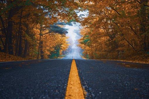 Autumn, Street, Trees, Nature, Asphalt, Landscape, Road