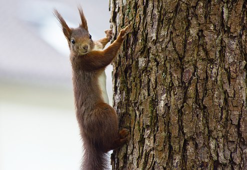 Squirrel, Animal, Nature, Rodent, Animal World