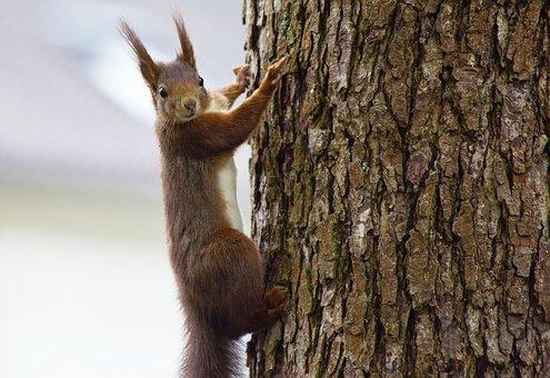 Squirrel, Animal, Nature, Rodent, Animal World
