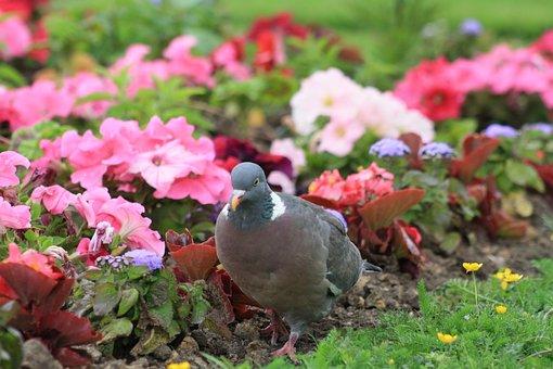 Garden, Park, Pigeon, Nature, Flower, Summer, Bloom