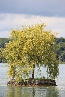 Chiemsee, Ladies Island, Lake, Tree, Bavaria, Lonely