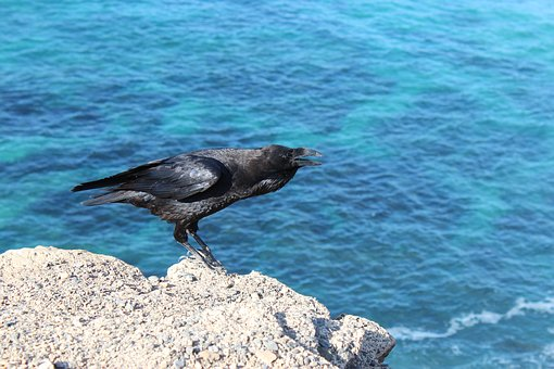Bird, Crow, Raven, Water, Abyss, Black, Blue, Wing