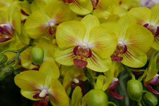 Flowers, Yellow Flowers, Yellow, Nature