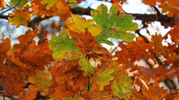 Autumn, Colorful Leaves, Yellow, Green, Orange