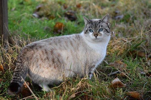 Cat, Pussy Cloud, Alley Cat, Cat Blue Eyes, Feline