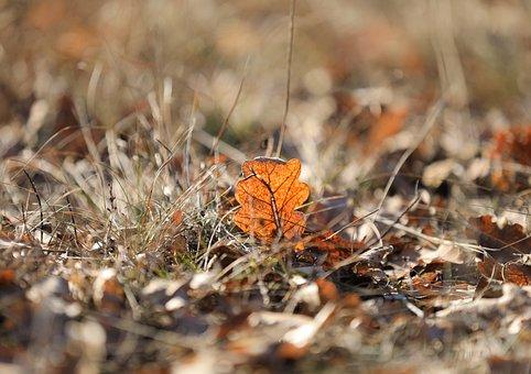 Holidays, Wood, Foliage, Oak, Backlight, Nature, Autumn