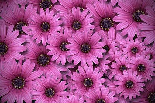 Spring, Flower, Blossom, Bloom, Plant, Bloom, Flora
