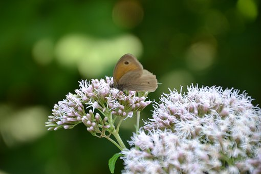 Butterfly, Insect, Nature, Summer, Butterflies, Blossom
