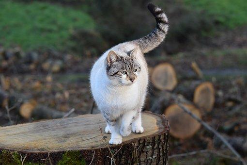 Cat, Pussy, Pussy Cloud, Feline, Cat Gutter, Animal