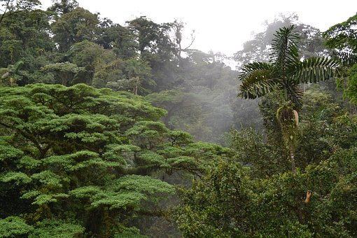 Emergent Layer, Costa Rica, Growth, Outdoor, Nature