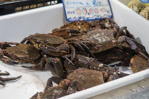 Crab, Market, Food, Fresh, Fishing, Meal, River, Fish