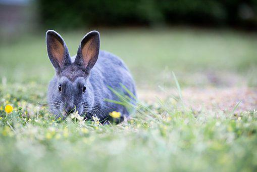 Bunny, Rabbit, Grass, Easter, Cute, Furry, Brown, Wild
