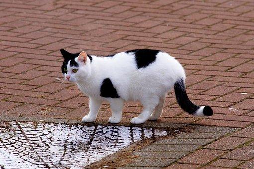 Cat, Female, Domestic Cat, Dear, Curious, Animal
