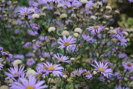 Field, Flowers, Purple, Nature, Bloom, Garden, Meadow