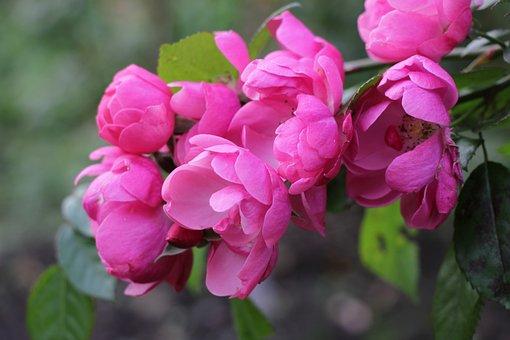 Flowers, Flora, Nature, Season, Blooming, Love, Garden