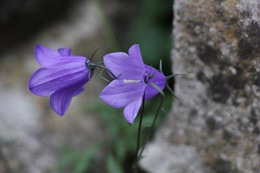Bell, Flowers, Flora, Landscape, Plants, Botanica