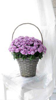 Flower Basket, Autumn Flowers, Asters