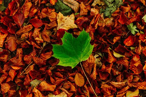 Autumn, Colors, Nature, Leaves, Forest, Color, Red