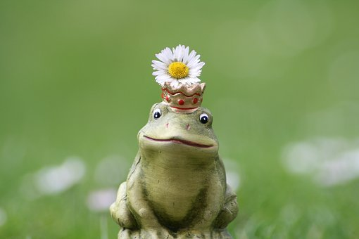 Frog, Frog Prince, Crown, Daisy, Desire, Wish You