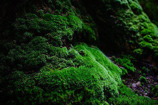Moss, Green, Natural, Stone, Forest, Vegetation