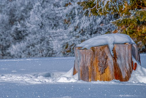 Log, Winter, Tribe, Snow, Icy, Frost, Cold, Forest