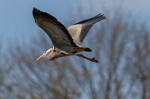 Nature, Landscape, Lake, Birds, Wildlife, Grey Heron