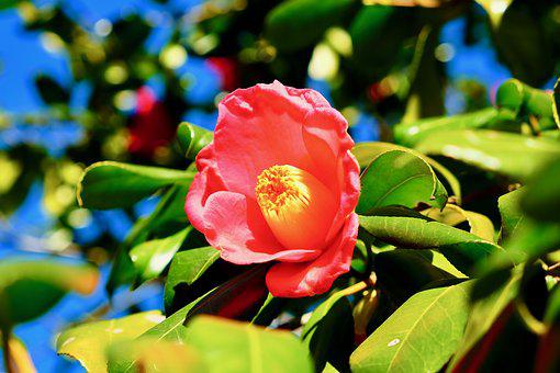 Flower, Pink, Blue, Winter, Beautiful, Fine Day, Lovely
