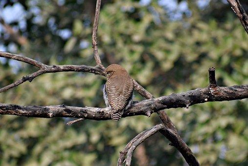 Owl, Bird, Sitting, Animal, Nature, Eyes, Plumage