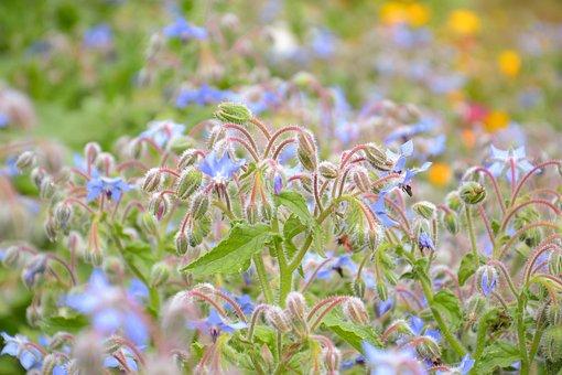 Plant, Summer, Nature, Flowers, Bloom, Houses, Garden