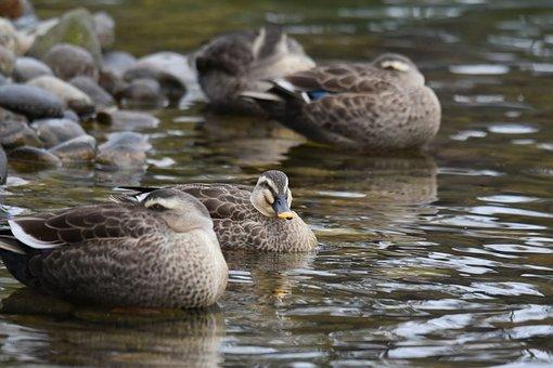 Animal, Pond, Waterside, Bird, Wild Birds, Waterfowl