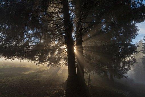 Light, Ray, Tree, Sun, Lichtspiel, Mood, Nature