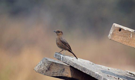 Small, Bird, Sitting, Nature, Animal, Robin, Plumage