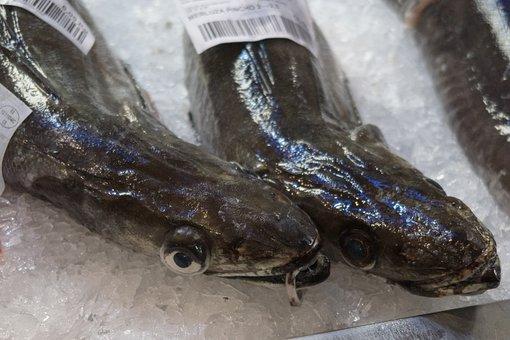 Fish, Market, Seafood, Food, Fresh, Sea, Eat, Catch