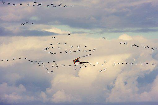 Dragons, Birds, Flying, Flock Of Birds, Sky, Sea, Bird