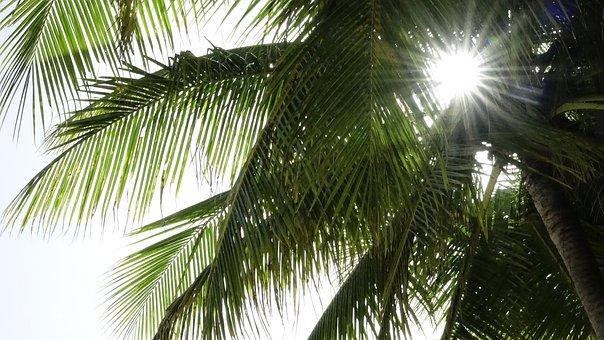 Solar, Beach, Mobile, Sea, Summer, Nature, Holiday, Sky