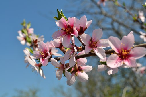 Spring, Flowers, Pink, Nature, Garden, Tree