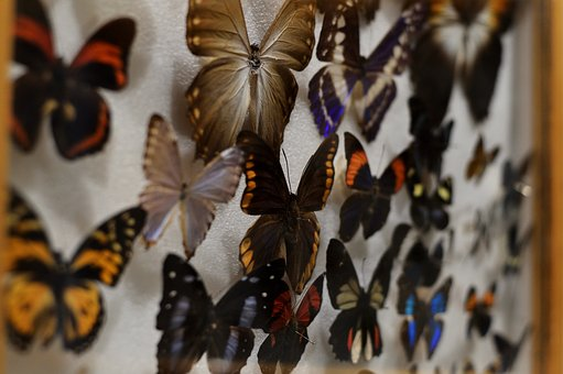 Butterfly, Insect, Collection, Nature, Wild Life, Set