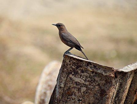 Bird, Sitting, Nature, Animal, Songbird, Wildlife