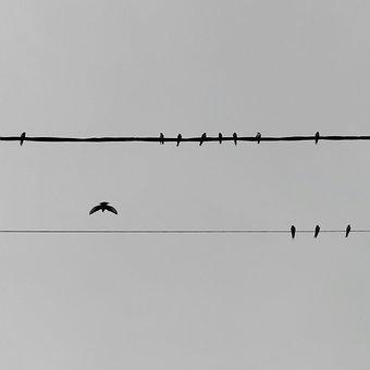 Swallow, Pylon, Black, Cable, Black And White, Wire