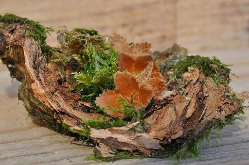 Beech Nuts, Wood, Moss, Bark, Deco