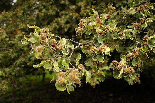 Beech Nuts, Beech, Road