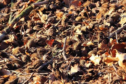 Beech Nuts, Beech, Forest Floor, Fruits, Fruit Pods