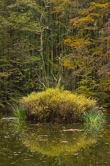 Autumn Forest, Pools, Pond, Forest, Biotope, Water