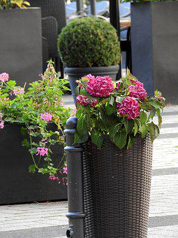 Flowers, Bucket, Vessel, Decoration, Deco, Planters