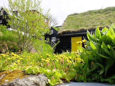 House, Natural, Torshavn, Færøere, Yellow, Flowers