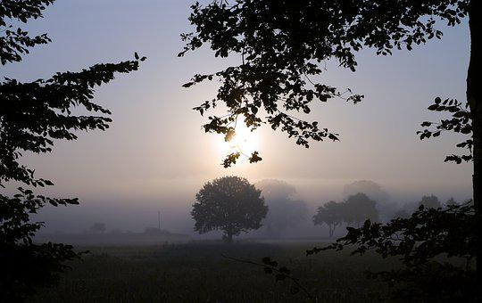 Fog, Morning Mist, Ground Fog, Sun, Mystical, Trees