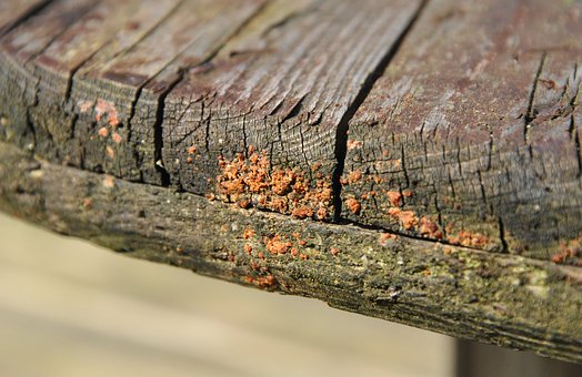 Wood, Fungi, Fungus, Decay, Weathered, Plank