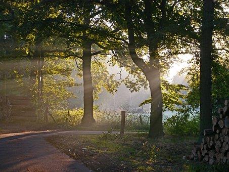 Autumn Forest, Fog, Morning Light, Glade, Meadow, Oak