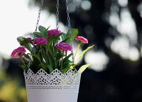 Floral, Flowers, Hanging Basket, Planters, Flowerpot