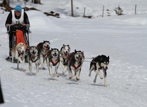 Husky, Dog, Face, Eyes, Fur, Animal, Huskies, Snow